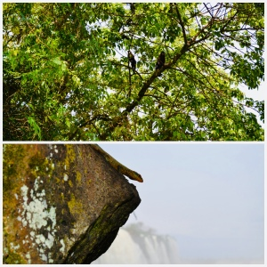 Biodiverse Iguaçu, Martin Haro